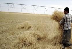 كم اشترى العراق من القمح هذا العام؟